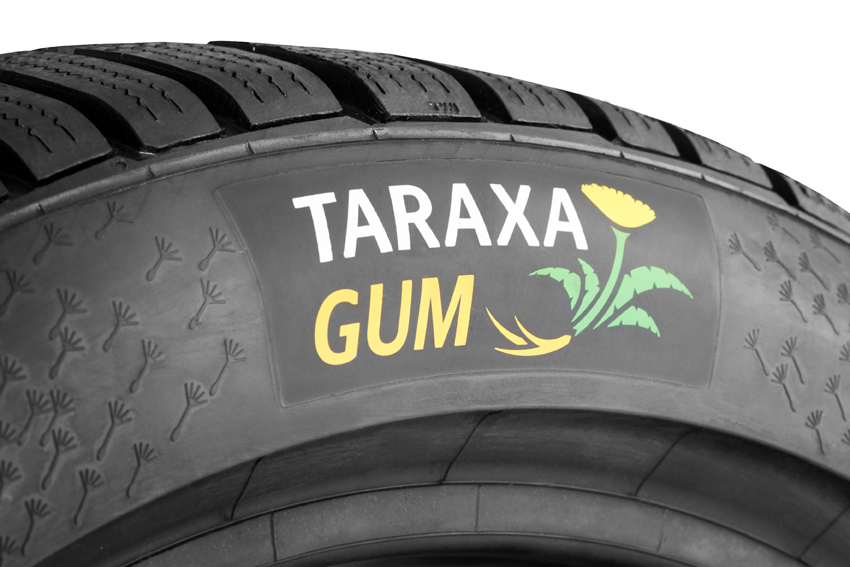 4-taraxagum-logo-wintercontact-ts-850-p